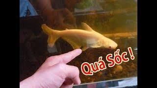 Hồ Cá Săn Mồi 900 lít Và Những Dự Định Mới Cho Hồ Cá Bảy Màu Thủy Sinh ( Fish Tank Update )