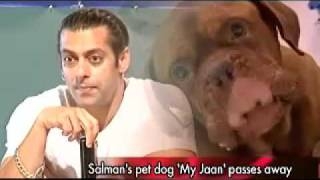 After the loss of his pet dog Myson earlier this year, Salman Khans...