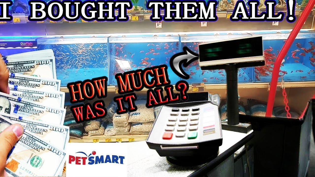 I ACTUALLY BOUGHT ALL THE FISH FROM PETSMART!