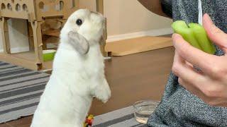 My bunny really want celery 🐰