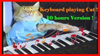 Repeat youtube video Keyboard Cat // 10 hours // 10 Stunden Keyboard spielende Katze