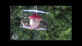 """"""" Bully Barrier """" Feeder For Blue Birds And Other Small Birds - A Wildbird.me Exclusive"""
