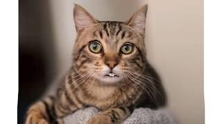 ראיתם חתולה שמדברת עברית?