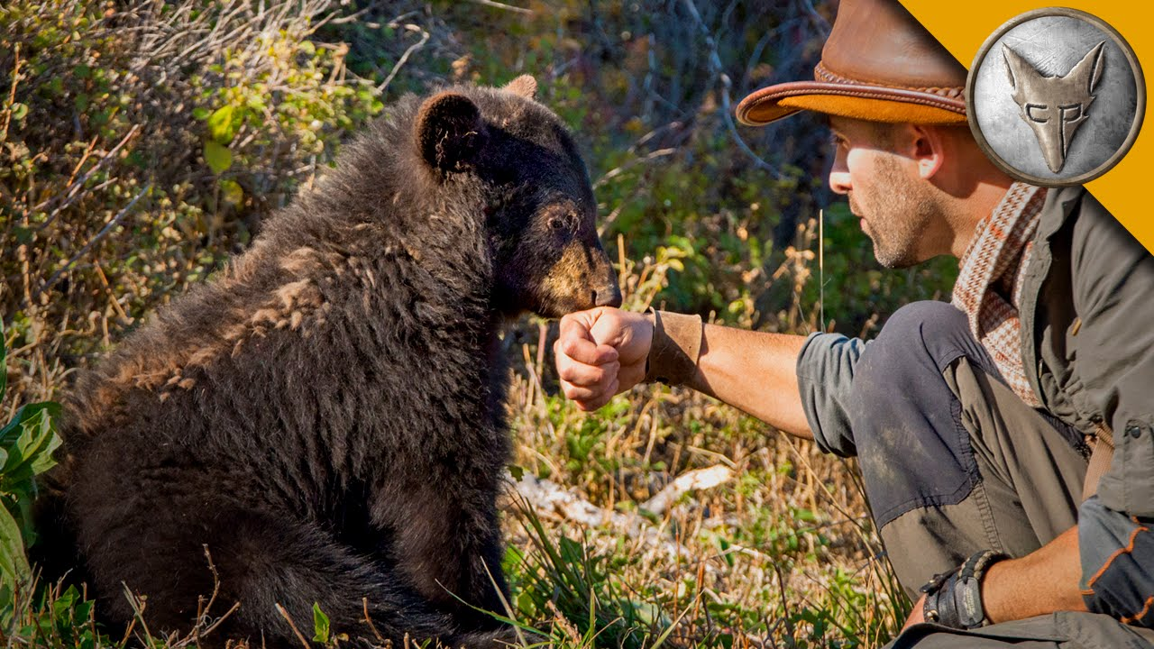 Baby Black Bear is the Teddy Bear of the Forest