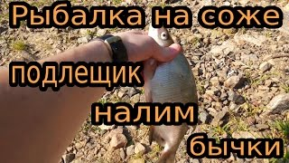 Одинокая рыбалка на соже, клёнки, подлещик, налим, бычки(Одинокая рыбалка на соже, клёнки, подлещик, налим, бычки https://www.youtube.com/watch?v=sGKBPR5rBRI ☻подписывайтесь на канал..., 2015-11-04T16:38:07.000Z)