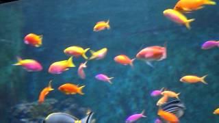 Pink Fish!