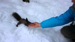 森で、かわいいエゾリスに会いました。 白いエゾリス 検索動画 10