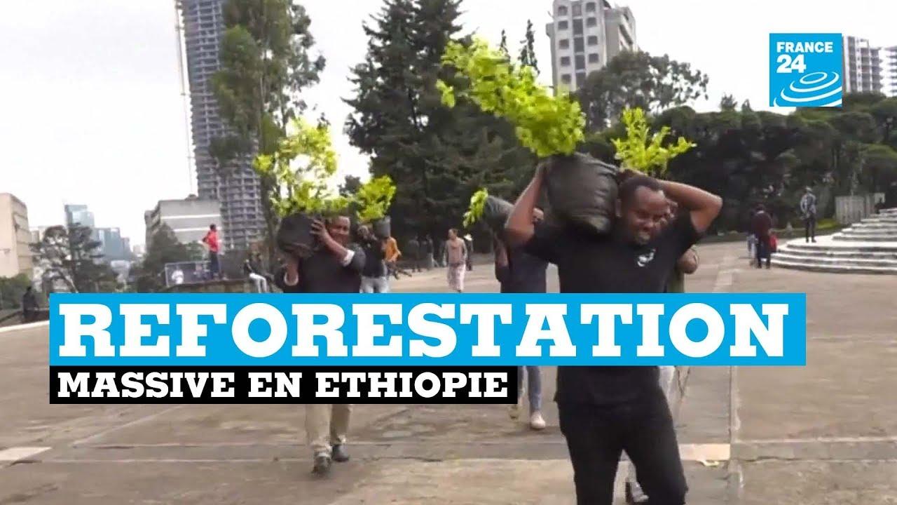 L'Éthiopie plante 353 millions d'arbres en une journée