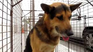 Abandoned Dog Turns From Fear to Love After Being Rescued