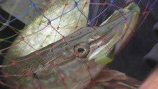 Рыбалка  в ноябре. My fishing.