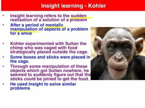 insight learning theory