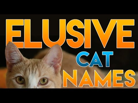 M Cat Names How to Name Your Elusi...