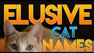 how to name your elusive cat