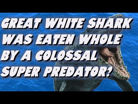 Great White Shark Was Eaten Whole By A Colossal  Super Shark?