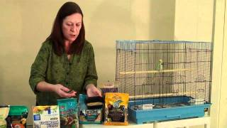 Foods for your Pet Bird