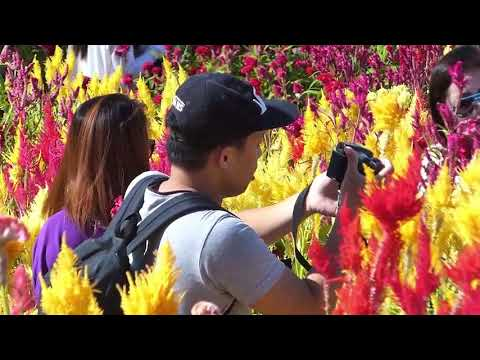 SELFY HEAVEN...FUN AT SIRAO FLOWER FARM, BUSAY, CEBU PHILIPPINES   Broadband