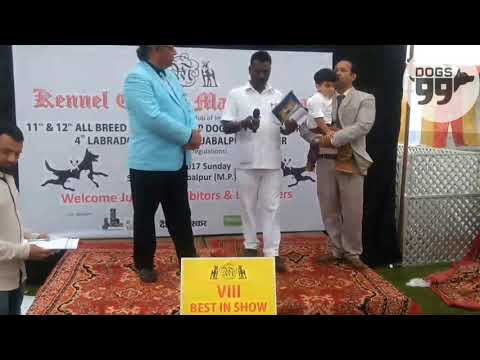 Jabalpur Dog Show | Results | Judge:Mr. Mukul Vaid | Dogs99.com