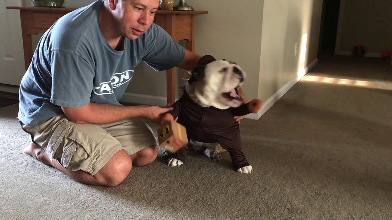 reuben-the-bulldog-not-so-special-delivery
