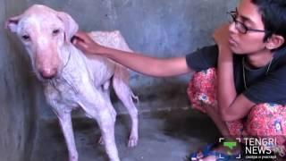 Видео об излечении собаки в Индии стало популярным в Сети