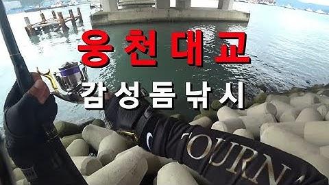 [바다낚시] 진해 웅천대교 감성돔낚시!! 살감시가 퍽퍽!!