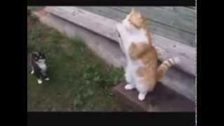 Кошки живут в России