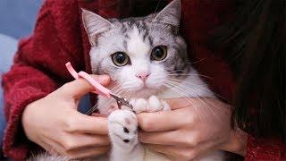 猫咪撒娇不想剪指甲,下一秒就被戏精女主人辣手摧花剪个精光,猫咪一脸懵逼...