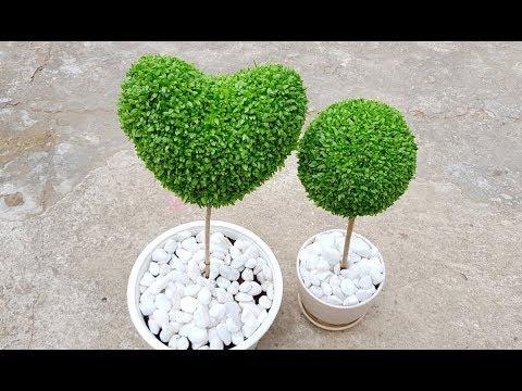 Cách trồng cây may mắn hình trái tim - Hướng dẫn làm trái tim bằng cỏ may mắn.