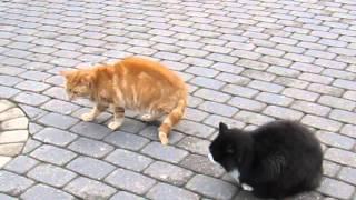 Горячие латышские коты