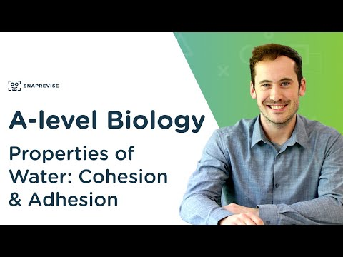 Properties of Water: Cohesion and Adhesion | A-level Biology | OCR, AQA, Edexcel