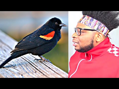 CATHOLIC REACTS TO Bird Saying Allah - Amazing!!!
