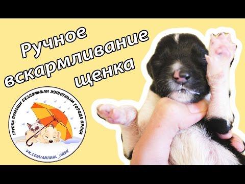 Вскармливание новорожденного щенка