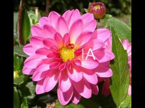 Las flore mas hermosas del mundo imagui for Las plantas mas bonitas