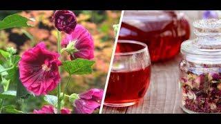 Hatmi Çiçeği İle Rahim Kanseri Öksürük Ve Tüm İltihaplara Son....