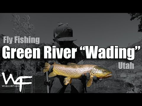 W4F - Fly Fishing Utah - Green River