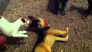 Good Dog, Bad Dog, WILD Dog (Ep. 8)