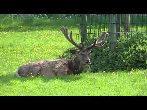 Tierpark Rosegg Kärnten/Wörthersee