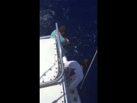 Blue Marlin Blue Point Charter