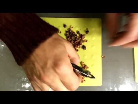 Как чистить кедровые орешки очистка кедрового ореха
