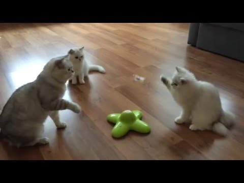 Cats play with funny butterfly