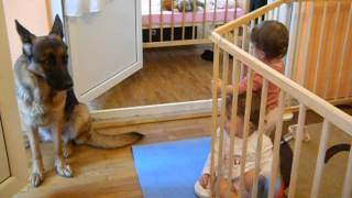 Twins Playing With German Shepherd Dog (first Free Contacts)