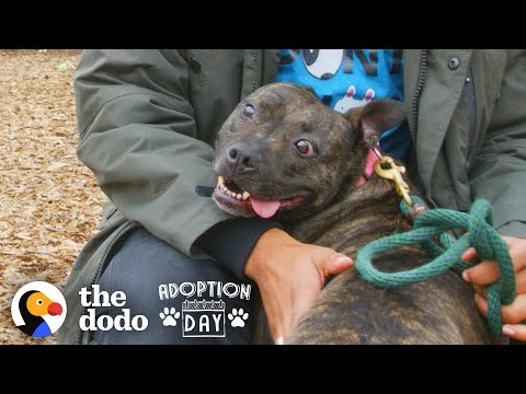 Blind Dog Spent 6 Years Spinning In A Shelter Kennel — Then This Happened | The Dodo Adoption Day