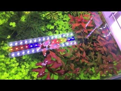 Oświetlenie Do Akwarium Jak świecić żeby Rosło Big Fish 006