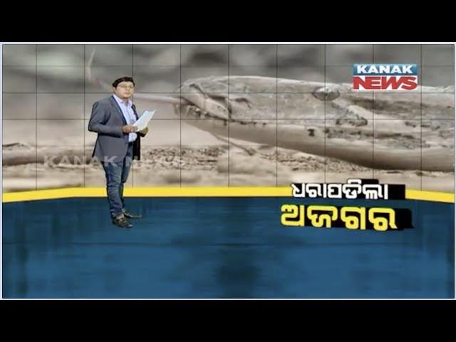 Damdar Khabar: 10 Feet Long Python Rescued From Odisha Capital