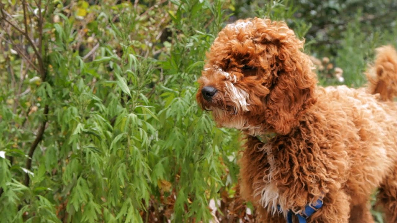 What You Should Know About Dog Grooming Puppy Care Youtube