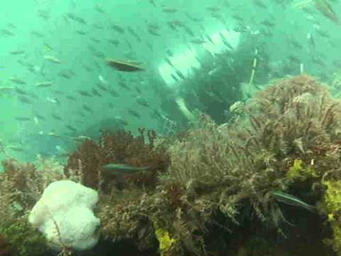 Dive trip to a crane wreck in bayport florida