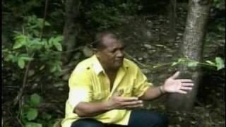 Campesina Ibaguereña - Toby Murgas & Ender Alvarado