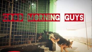 Morning Dog food diet | morning food for my dogs