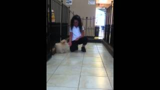 Project Pomeranian Allergy