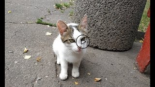 Едят ли кошки чипсы?