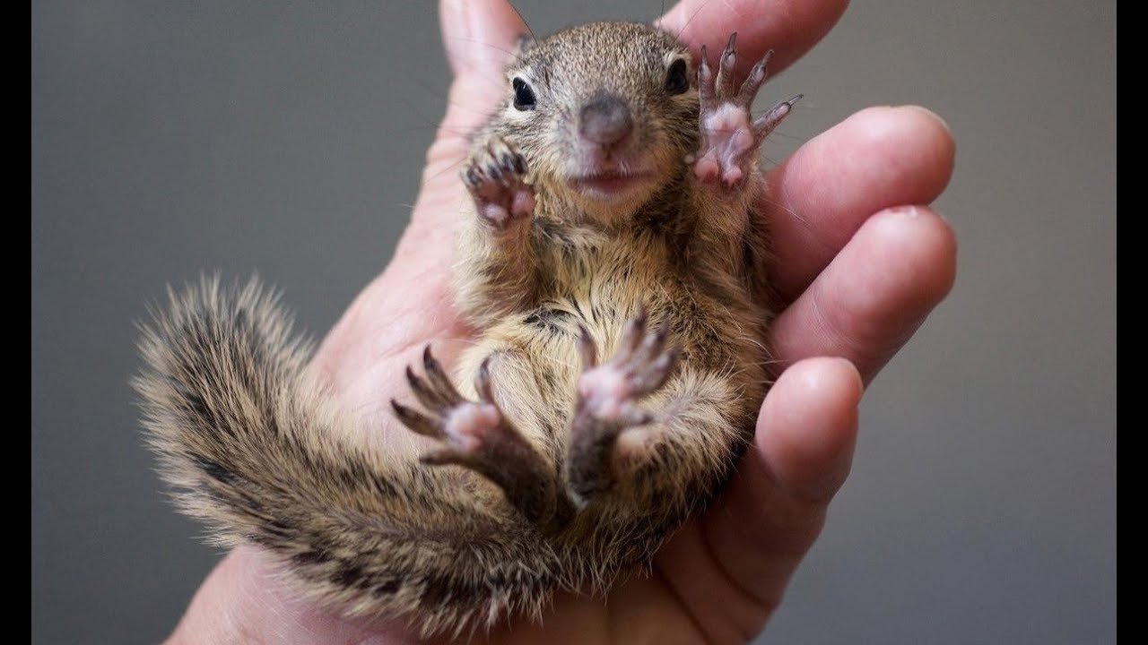 90 Seconds Of Lovely Baby Squirrels Sweet And Cuddly